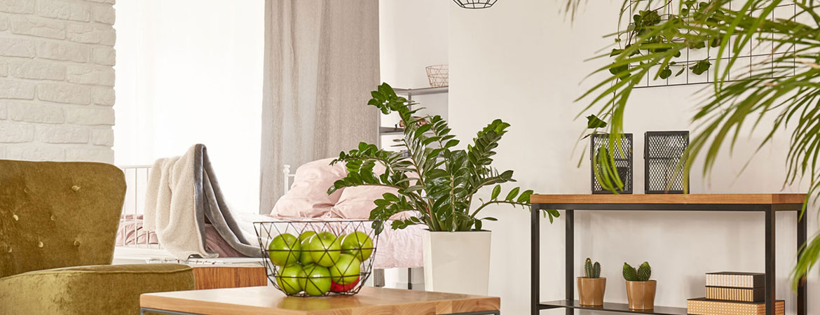 5 Low-Maintenance Houseplants for a Healthier Home