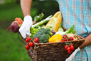 garden harvest of vegetables