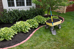 mulch around plants