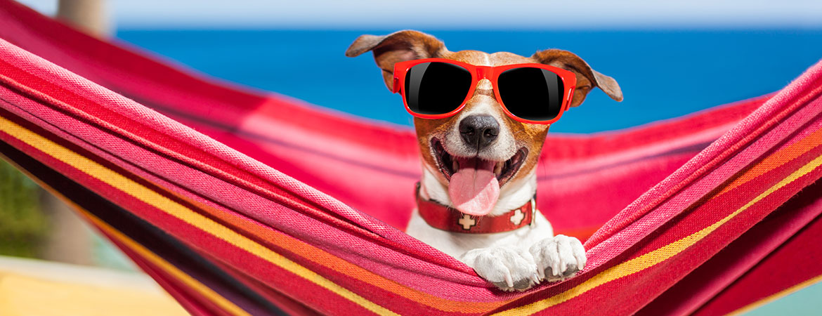 "Keep Your Dog Safe and Cool in the ""Dog Days"" of Summer"