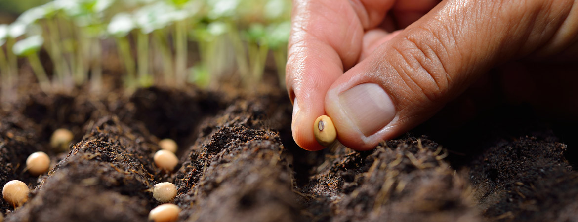 Tips for Gardening from Seeds