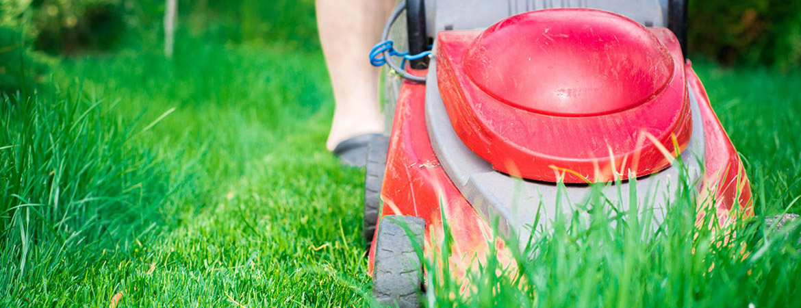 Spring Lawn Care After Snow, Rain, or Drought